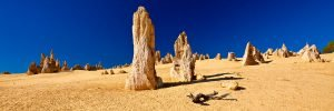 Dead-Wood_Pinnacles_Nambung-National-Park_Cervantes_Perth_Central-West_WA_colour