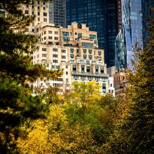Central_View_Central_Park_Manhattan_New_York_USA_Colour