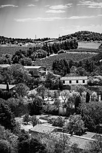 French_Vineyards_Carcassonne_Languedoc_Occitanie_South_France_Black_and_White